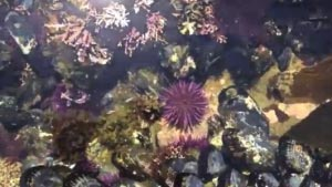 Tidepool cambria