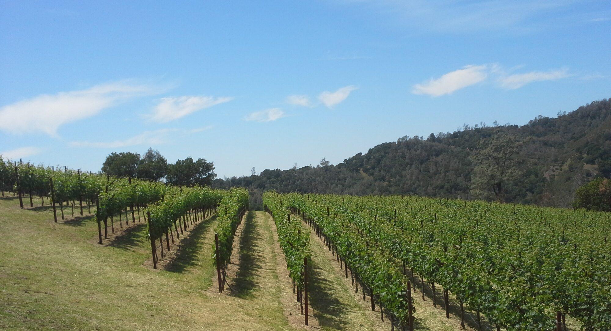 Piña Vineyard Management