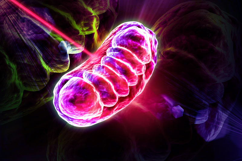 mitochondria - light therapy - how it works