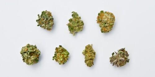 strains of cannabis