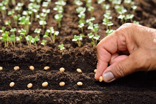 The Vital Importance of a Healthy Seed Supply To Feed The World
