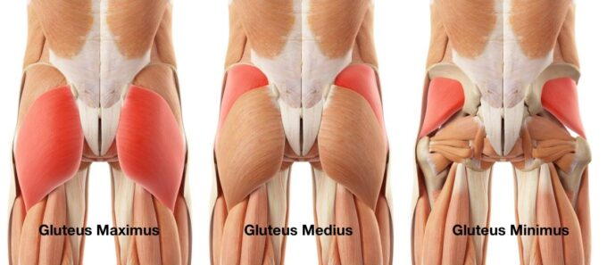 Glute Activation and Strength
