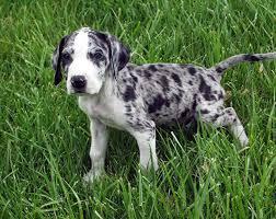 Puppy Class Extras – Potty Training