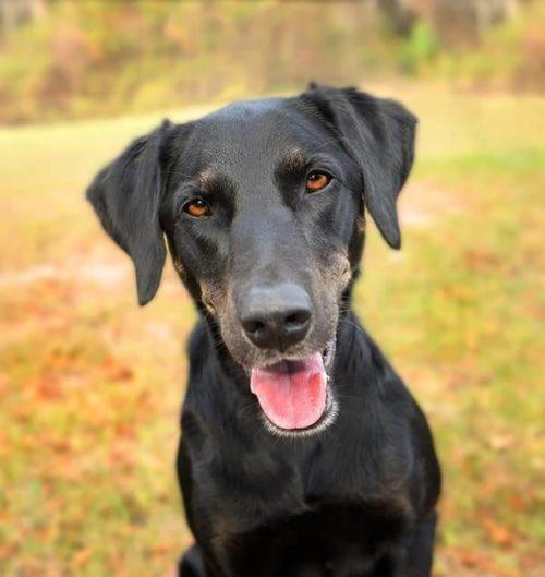Adult dog one-on-one training Minneapolis