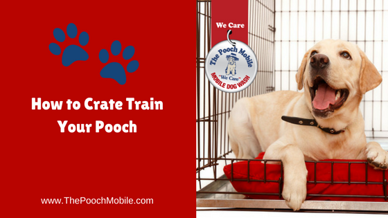 How to Crate Train Your Pooch