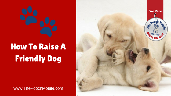 How To Raise A Friendly Dog
