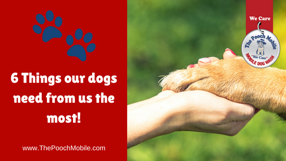 6 Things our dogs need from us the most!