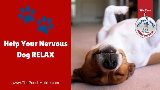 Help your nervous dog relax