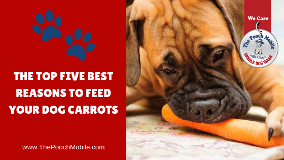 carrots safe for dogs