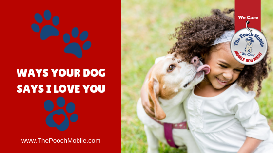 Ways Your Dog Says I Love You