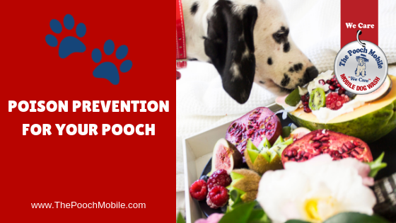 Poison Prevention for Your Pooch