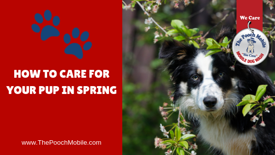 How to Care for Your Pup in Spring