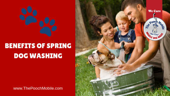 Benefits of Spring Dog Washing