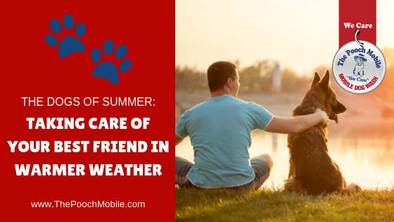 The Dogs of Summer: Taking Care of Your Best Friend in Warmer Weather