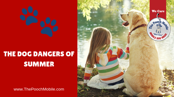 The Dog Dangers of Summer