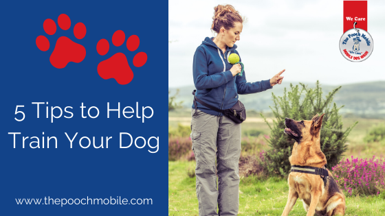 5 Tips to Help Train Your Dog