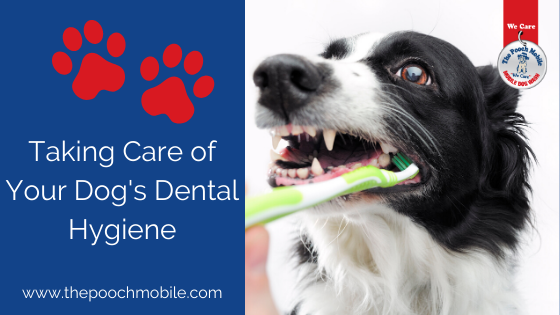 Taking Care of Your Dog's Dental Hygiene