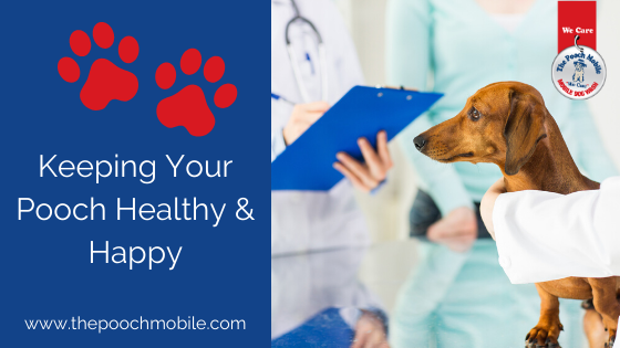 Keeping Your Pooch Healthy & Happy