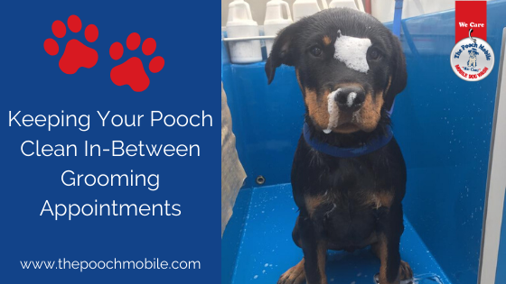 Keeping Your Pooch Clean Inbetween Grooming