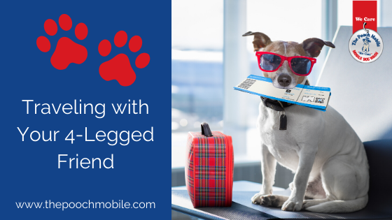 Traveling with Your 4-Legged Friend