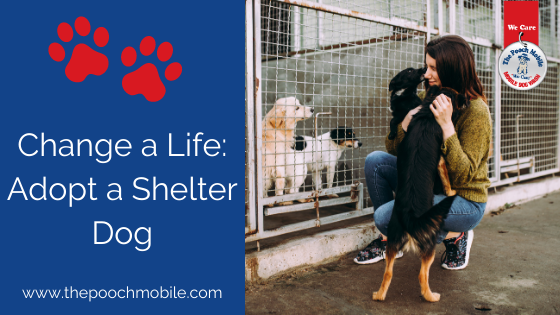 Save a Life: Adopt a Shelter Dog