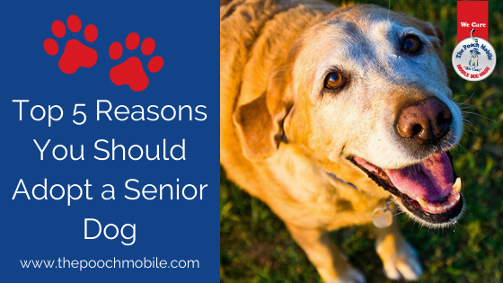 Top 5 Reasons You Should Adopt A Senior Dog