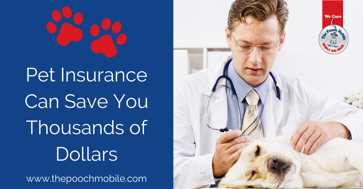 Pet Insurance Can Save You Thousands of Dollars