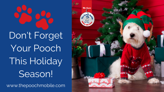 Don't Forget Your Pooch This Holiday Season!