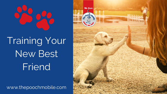Training Your New Best Friend