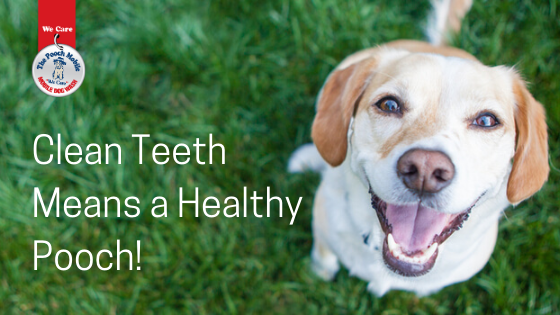 Clean Teeth Means A Healthy Pooch!