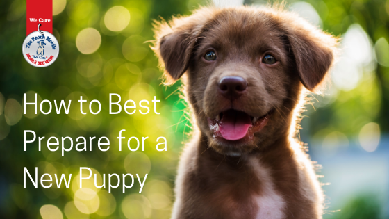 How To Best Prepare For A New Puppy
