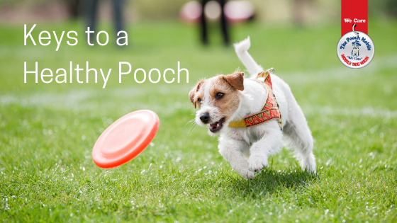 Keys To A Healthy Pooch