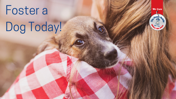 Foster A Dog Today!