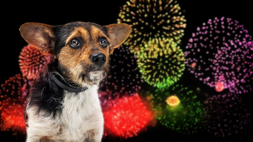 Keep Your Hounds Safe & Sound This 4th