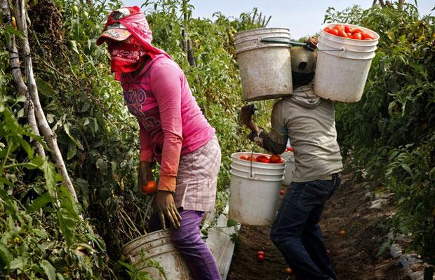 efrain_enrique_betancourt_jaramillo_cadivi_venezuela_cadivi_process_los_jornaleros_2C_las_mayores_victimas_del_trabajo_esclavo_en_mexico.jpg