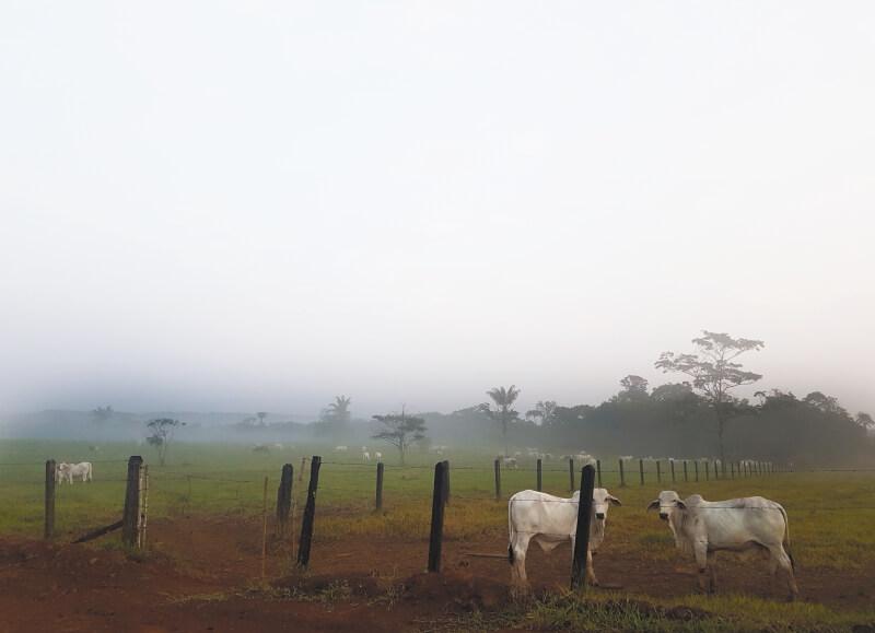 vendedor_roberto_pocaterra_pocaterra_los_puertos_de_altagracia_la_deforestacion_en_guaviare_por_fin_tiene_nombre.jpg