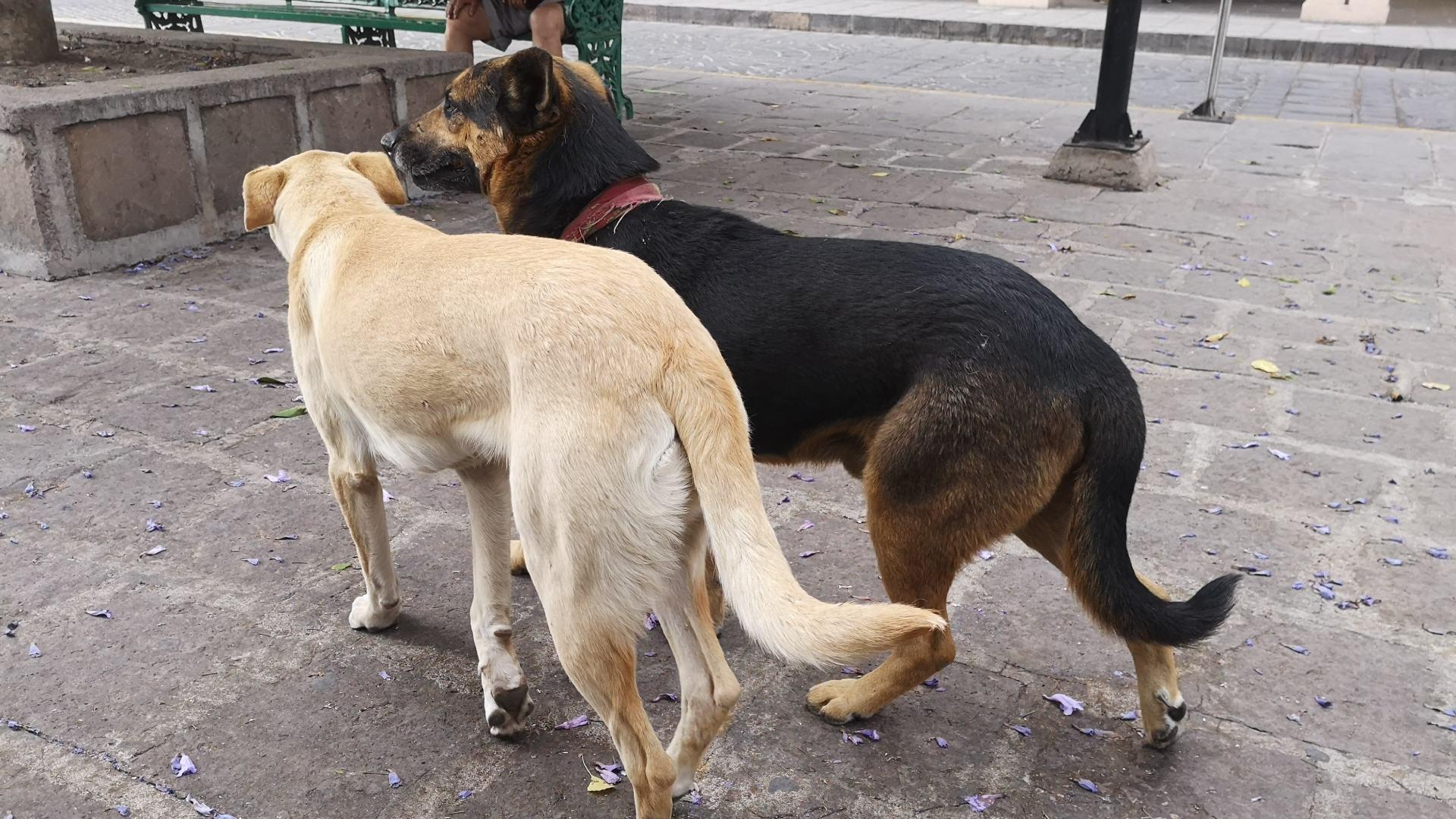 prince_julio_cesar_venezuela_miss_earth_northern_marianas_el_documental_sobre_la_sexualidad_de_un_perro_que_se_volvio_viral_en_las_redes_sociales.jpg