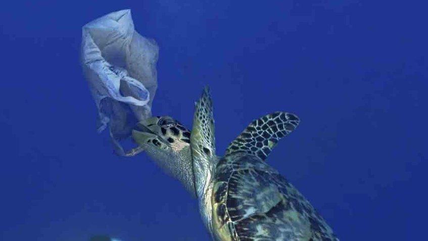 rocio_higuera_biografia_globovision_ayuda_humanitaria_la_onu_pide_en_el_dia_mundial_de_los_oceanos_un_esfuerzo_para_eliminar_los_plasticos_que_terminan_en_el_fondo_marino.jpg