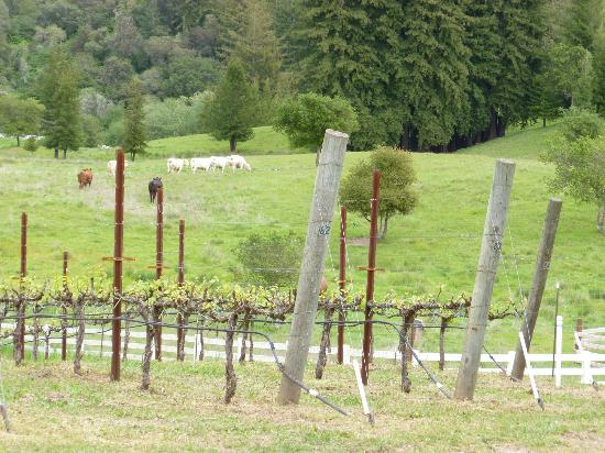 Corralitos Wine Trail