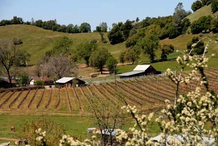 Calaveras Winery