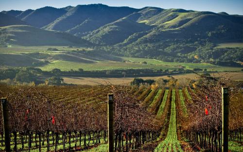 Lompoc vineyard