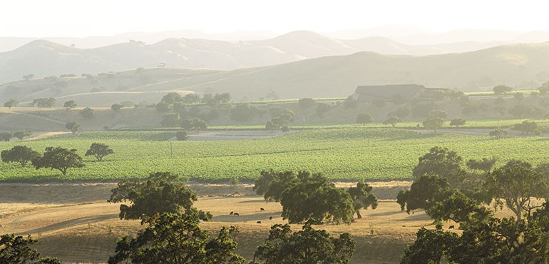 Santa Ynez Valley Vista