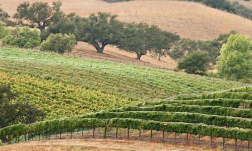 Madera Vineyards