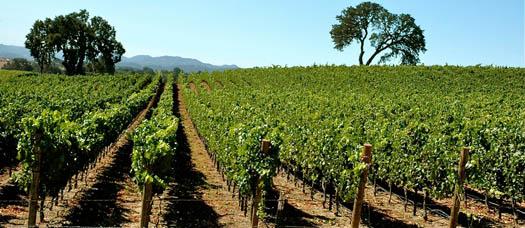 Ventura County Wine Trail