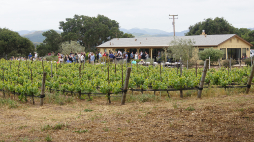 Dragonette Pick-Up Party at Duvarita Vineyards