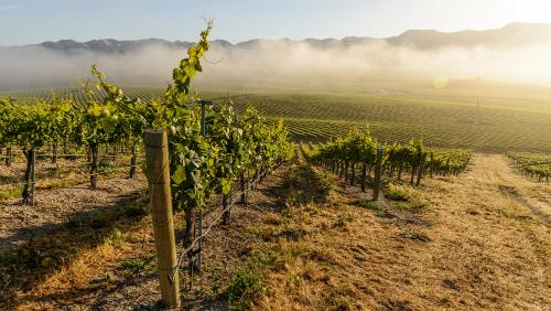 Tolosa Vineyard