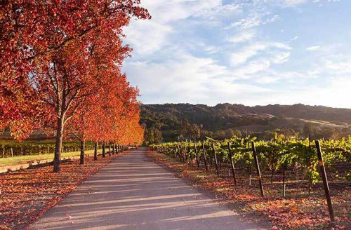 Westside Road Wine Trail