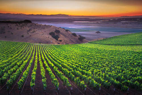Monterey Vineyards