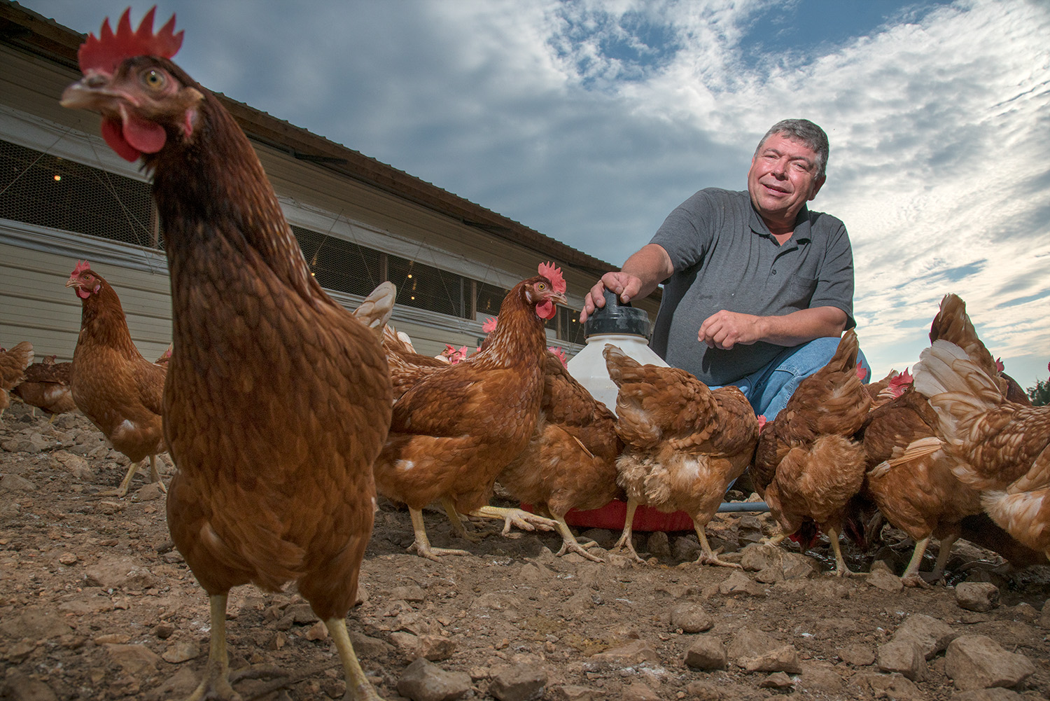 Editorial chicken farmer portrait