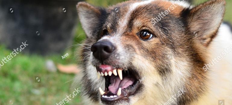 Philadelphia Injury Lawyer – Dog Bite Lawyer